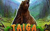 Лучший новый аппарат Taiga